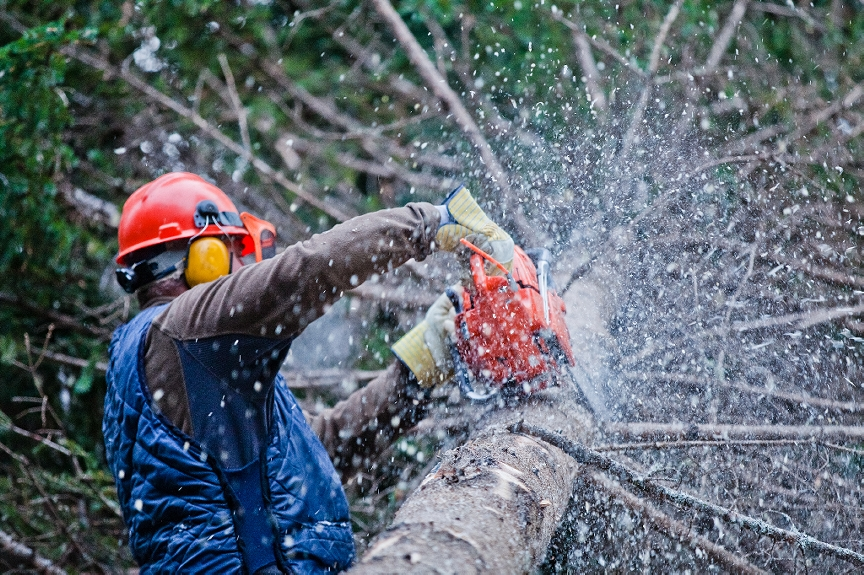 Tree Removal, Tree Surgeons, Tree Stump Removal, Tree Surgery West Bromwich, Tree Stump Removal Cost, Tree Felling, Price For Tree Removal